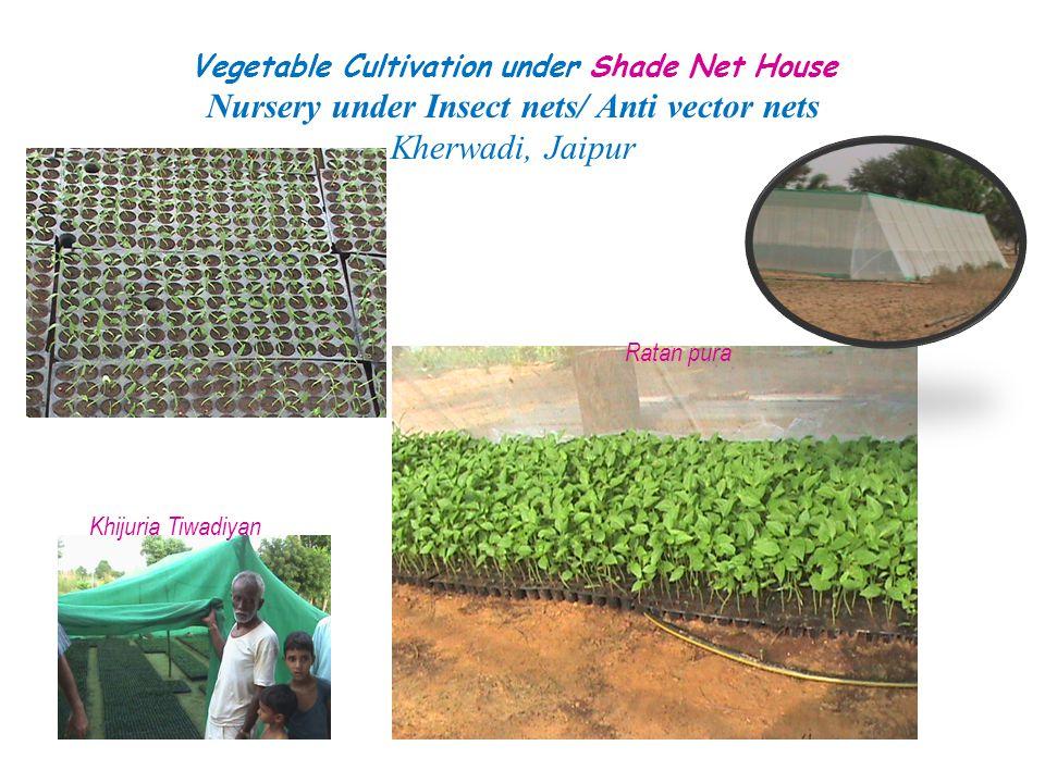 Vegetable Cultivation under Shade Net House Nursery under Insect nets/ Anti vector nets Kherwadi, Jaipur Khijuria Tiwadiyan Ratan pura