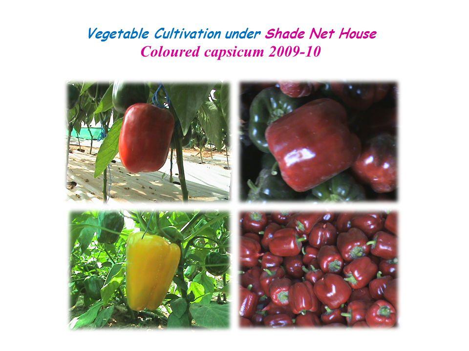 Vegetable Cultivation under Shade Net House Coloured capsicum 2009-10