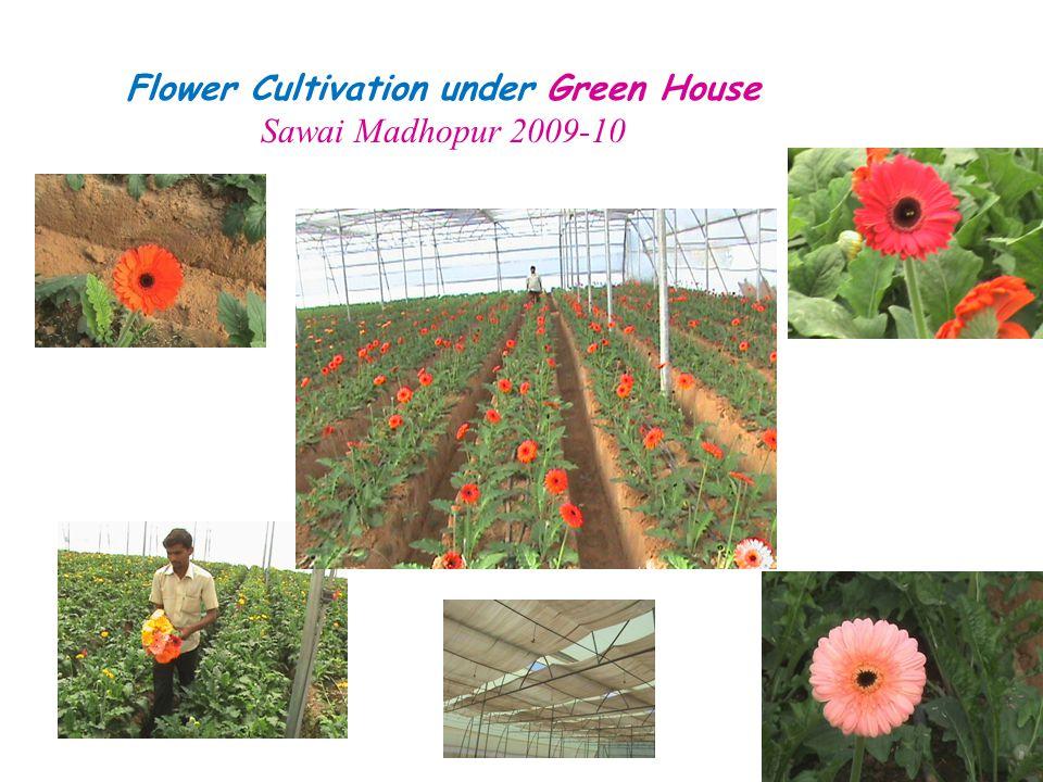 Flower Cultivation under Green House Sawai Madhopur 2009-10