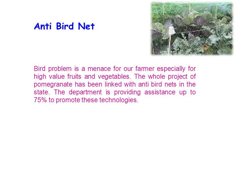 Anti Bird Net Bird problem is a menace for our farmer especially for high value fruits and vegetables. The whole project of pomegranate has been linke