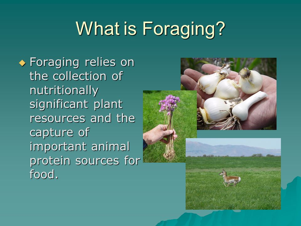 What is Foraging.