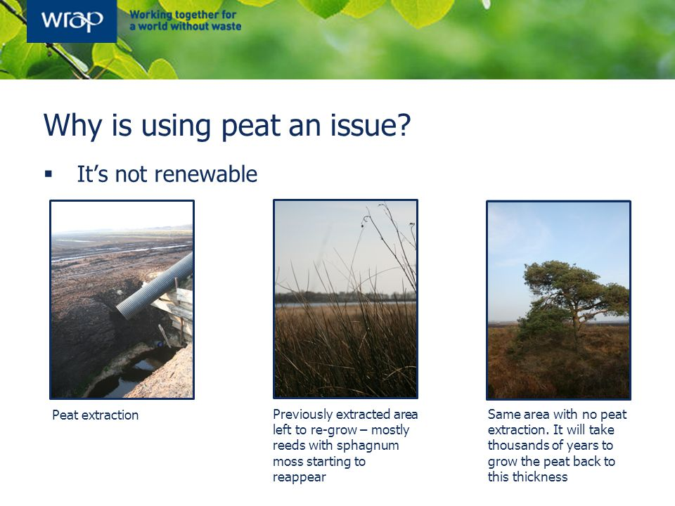 Why is using peat an issue?  It's not renewable Peat extraction Previously extracted area left to re-grow – mostly reeds with sphagnum moss starting