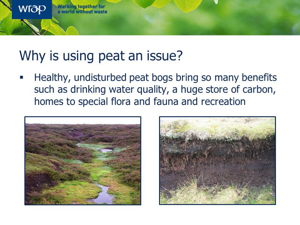 Why is using peat an issue?  Healthy, undisturbed peat bogs bring so many benefits such as drinking water quality, a huge store of carbon, homes to s