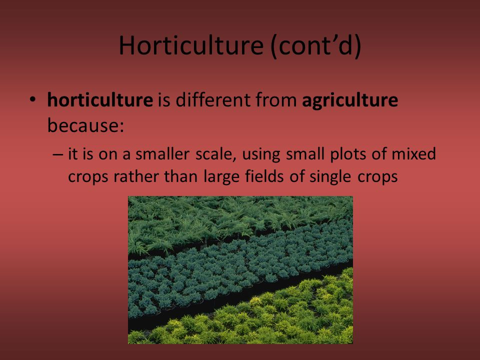 Horticulture (cont'd) horticulture is different from agriculture because: – it is on a smaller scale, using small plots of mixed crops rather than lar