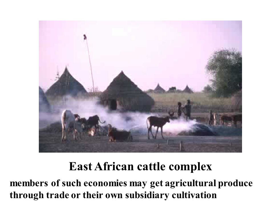 East African cattle complex members of such economies may get agricultural produce through trade or their own subsidiary cultivation