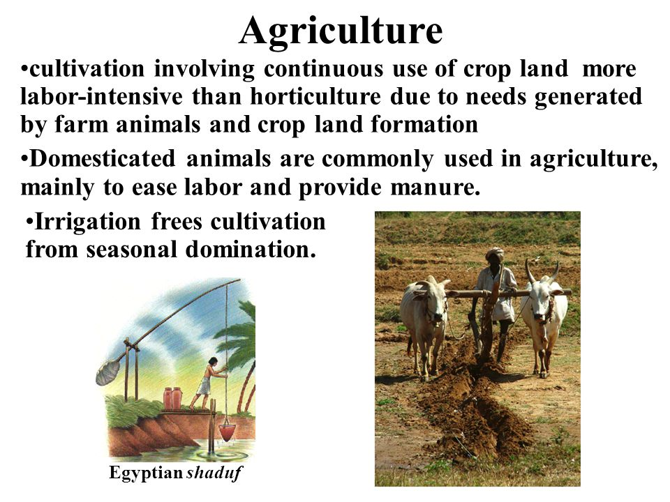 cultivation involving continuous use of crop land more labor-intensive than horticulture due to needs generated by farm animals and crop land formatio