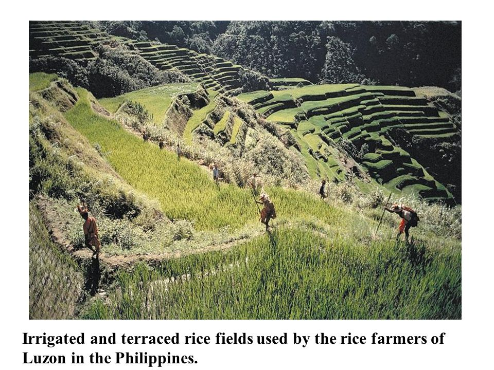 Agriculture Irrigated and terraced rice fields used by the rice farmers of Luzon in the Philippines.
