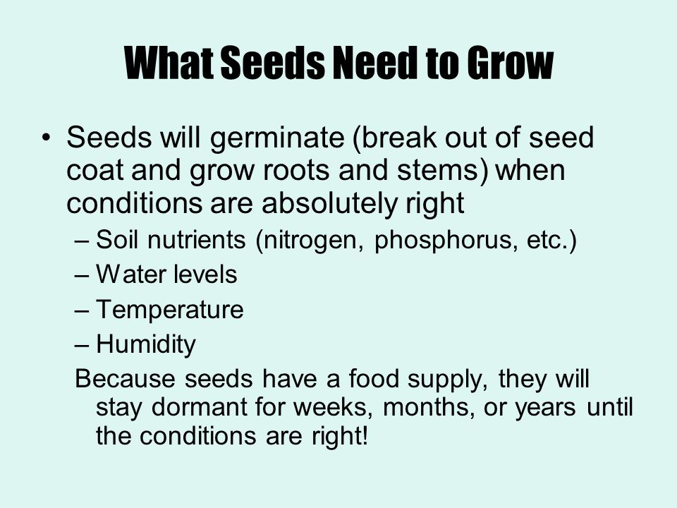 What Seeds Need to Grow Seeds will germinate (break out of seed coat and grow roots and stems) when conditions are absolutely right –Soil nutrients (n