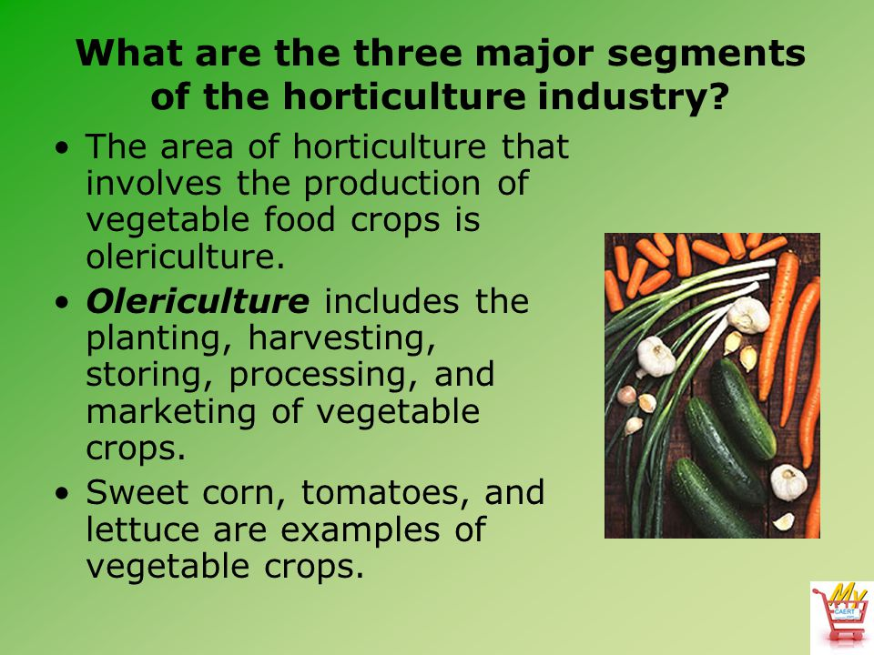 What are the three major segments of the horticulture industry.