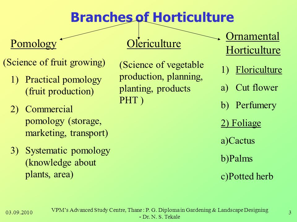 Branches of Horticulture PomologyOlericulture Ornamental Horticulture (Science of fruit growing) 1)Practical pomology (fruit production) 2)Commercial pomology (storage, marketing, transport) 3)Systematic pomology (knowledge about plants, area) (Science of vegetable production, planning, planting, products PHT ) 1)Floriculture a)Cut flower b)Perfumery 2) Foliage a)Cactus b)Palms c)Potted herb 03.09.20103 VPM's Advanced Study Centre, Thane : P.
