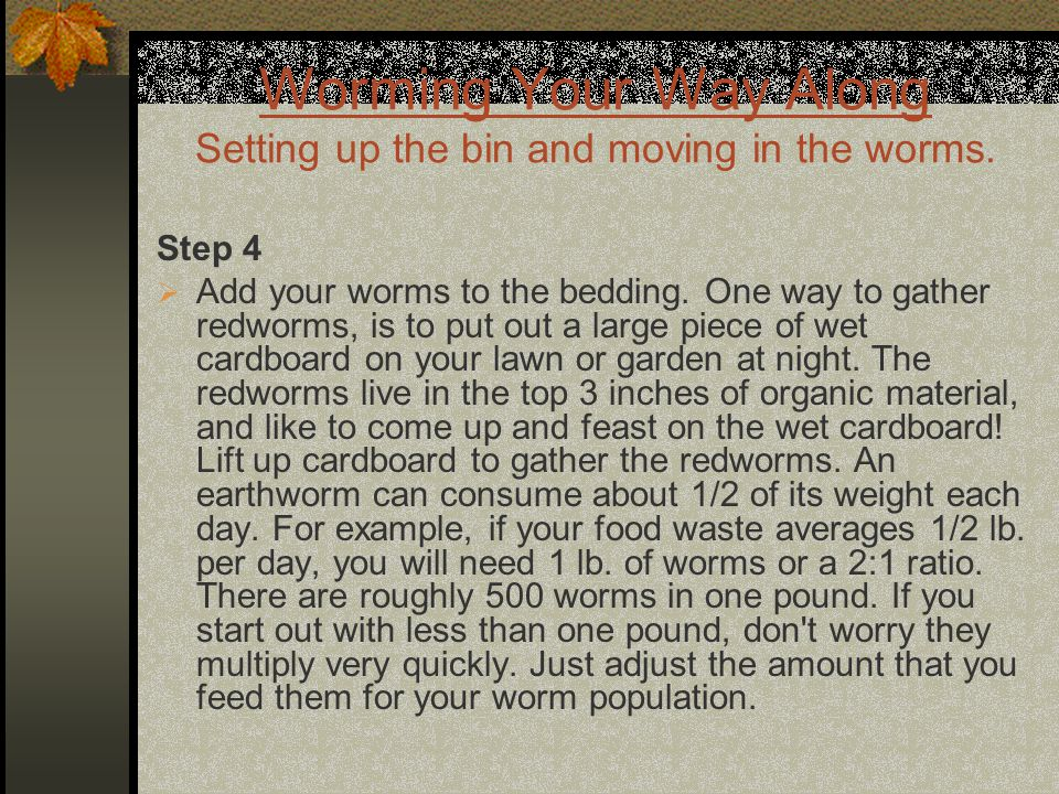 Worming Your Way Along Setting up the bin and moving in the worms. Step 4  Add your worms to the bedding. One way to gather redworms, is to put out a