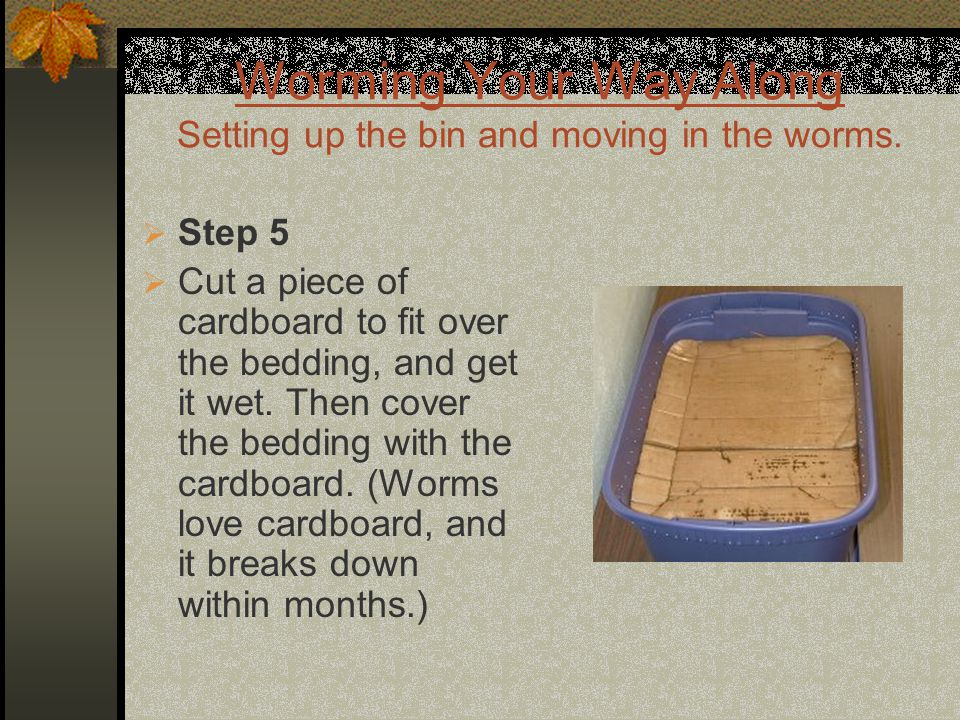 Worming Your Way Along Setting up the bin and moving in the worms.  Step 5  Cut a piece of cardboard to fit over the bedding, and get it wet. Then c