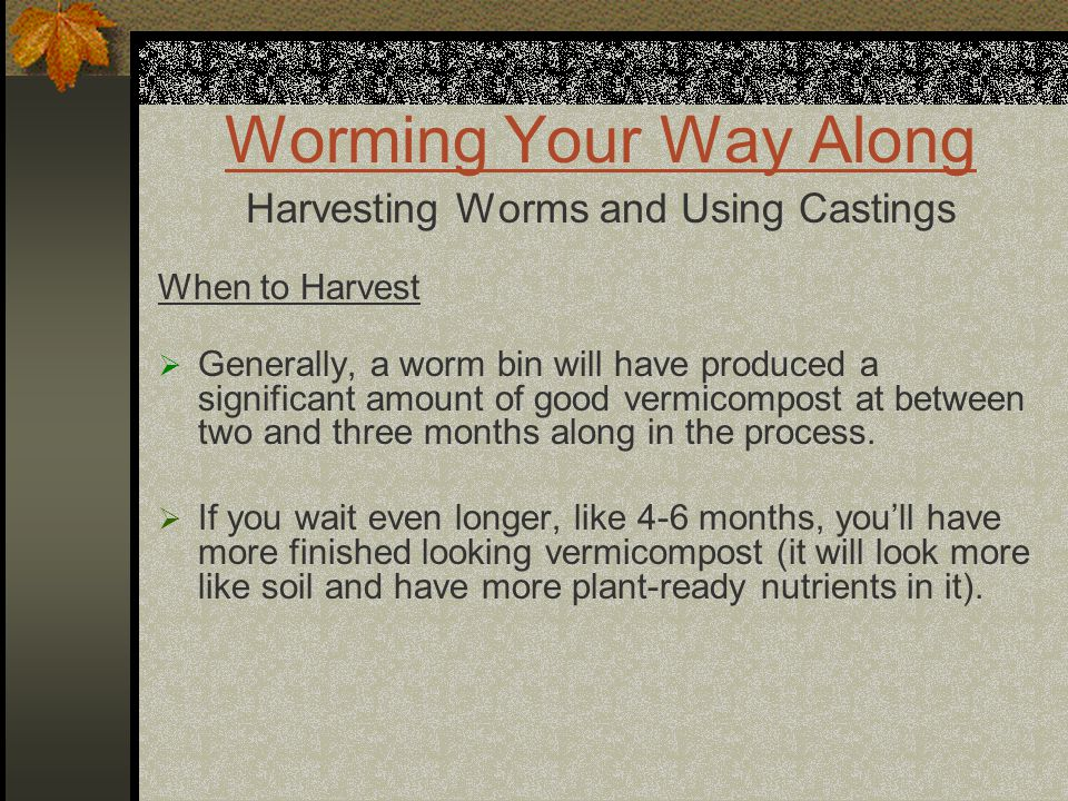 Worming Your Way Along Harvesting Worms and Using Castings When to Harvest  Generally, a worm bin will have produced a significant amount of good vermicompost at between two and three months along in the process.
