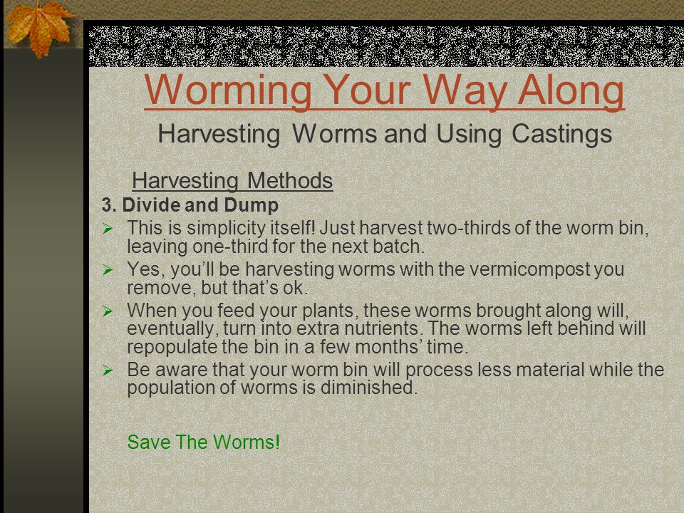 Worming Your Way Along Harvesting Worms and Using Castings Harvesting Methods 3. Divide and Dump  This is simplicity itself! Just harvest two-thirds