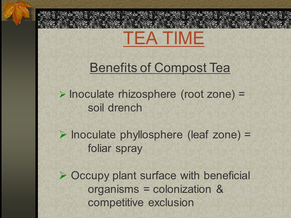 TEA TIME Benefits of Compost Tea  Inoculate rhizosphere (root zone) = soil drench  Inoculate phyllosphere (leaf zone) = foliar spray  Occupy plant