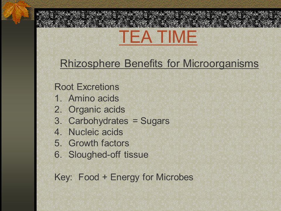 TEA TIME Rhizosphere Benefits for Microorganisms Root Excretions 1.Amino acids 2.Organic acids 3.Carbohydrates = Sugars 4.Nucleic acids 5.Growth factors 6.Sloughed-off tissue Key: Food + Energy for Microbes