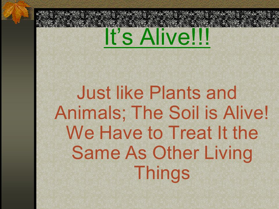 It's Alive!!. Just like Plants and Animals; The Soil is Alive.