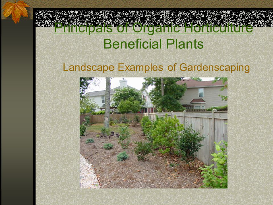 Principals of Organic Horticulture Beneficial Plants Landscape Examples of Gardenscaping