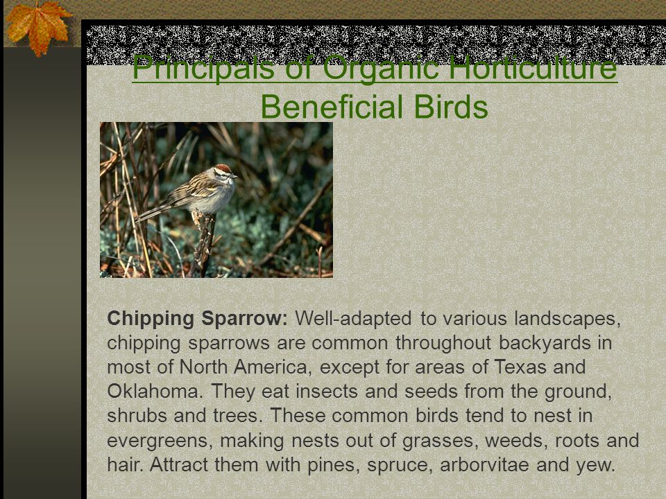 Principals of Organic Horticulture Beneficial Birds Chipping Sparrow: Well-adapted to various landscapes, chipping sparrows are common throughout backyards in most of North America, except for areas of Texas and Oklahoma.