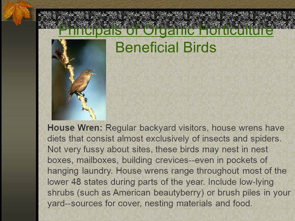 Principals of Organic Horticulture Beneficial Birds House Wren: Regular backyard visitors, house wrens have diets that consist almost exclusively of insects and spiders.