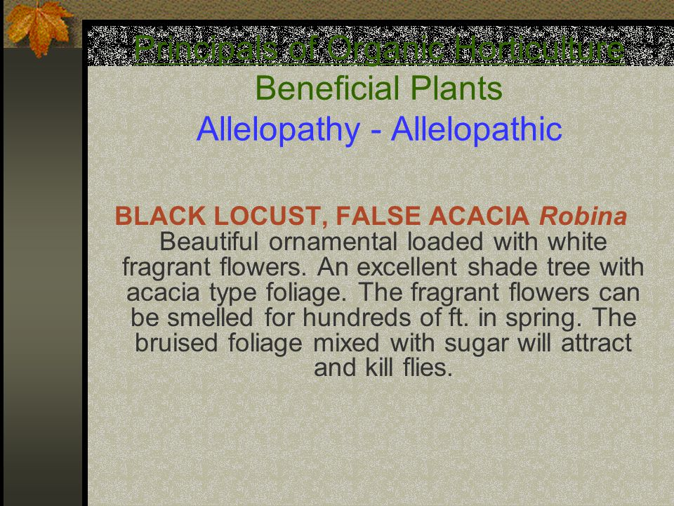 Principals of Organic Horticulture Beneficial Plants Allelopathy - Allelopathic BLACK LOCUST, FALSE ACACIA Robina Beautiful ornamental loaded with white fragrant flowers.