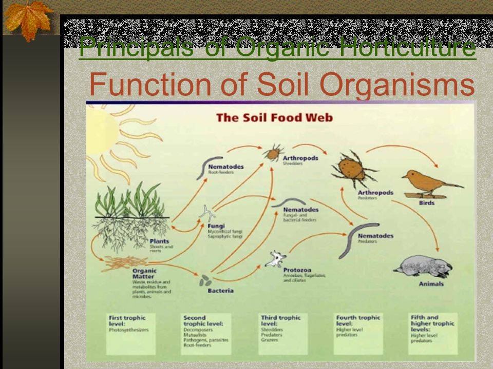 Principals of Organic Horticulture Function of Soil Organisms