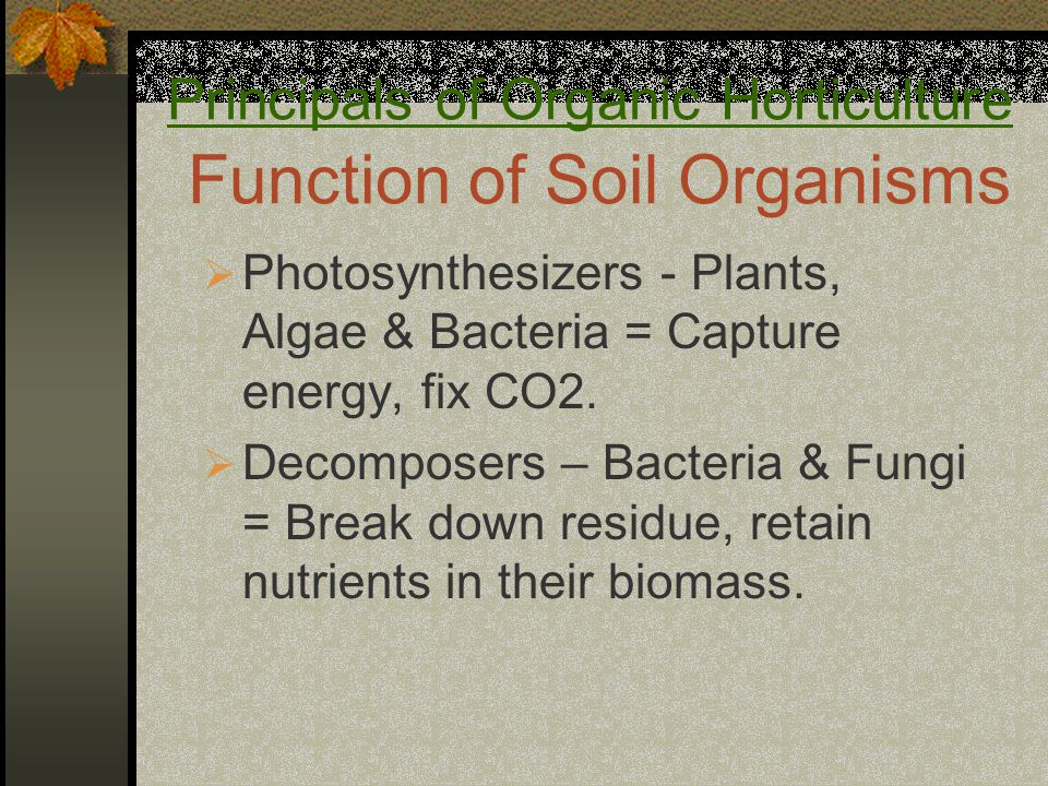  Photosynthesizers - Plants, Algae & Bacteria = Capture energy, fix CO2.  Decomposers – Bacteria & Fungi = Break down residue, retain nutrients in t