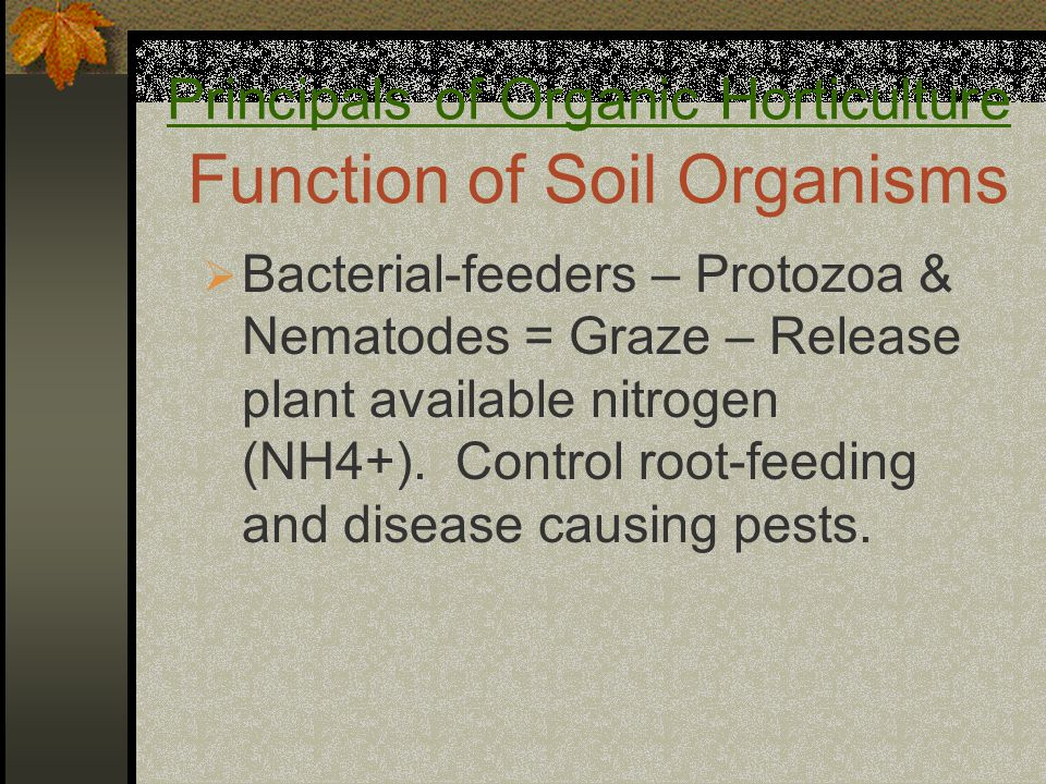 Principals of Organic Horticulture Function of Soil Organisms  Bacterial-feeders – Protozoa & Nematodes = Graze – Release plant available nitrogen (NH4+).
