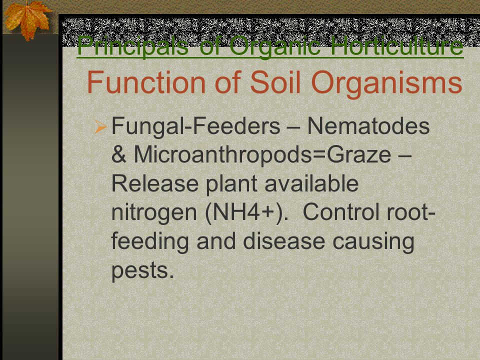 Principals of Organic Horticulture Function of Soil Organisms  Fungal-Feeders – Nematodes & Microanthropods=Graze – Release plant available nitrogen (NH4+).