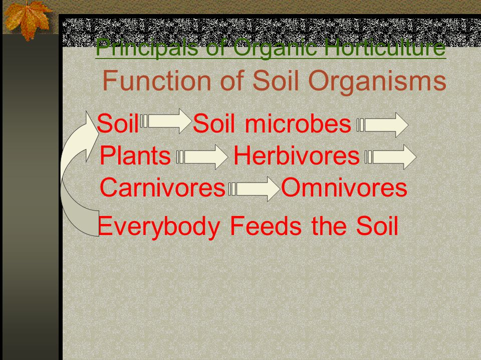 Principals of Organic Horticulture Function of Soil Organisms Soil Soil microbes Plants Herbivores Carnivores Omnivores Everybody Feeds the Soil