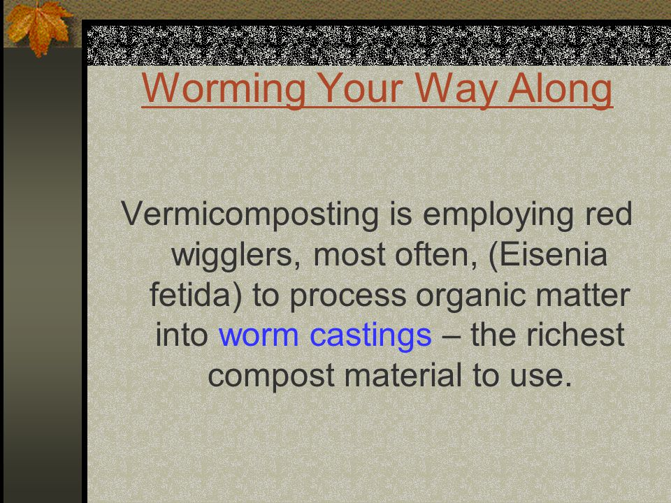 Worming Your Way Along Vermicomposting is employing red wigglers, most often, (Eisenia fetida) to process organic matter into worm castings – the richest compost material to use.