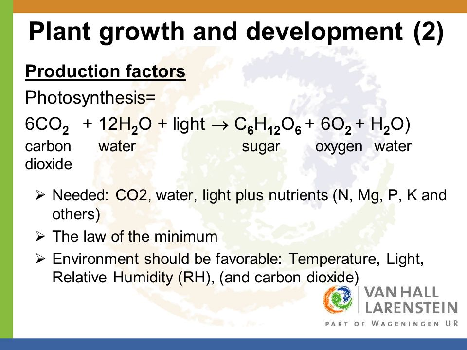 Plant growth and development (2) Production factors Photosynthesis= 6CO 2 + 12H 2 O + light  C 6 H 12 O 6 + 6O 2 + H 2 O) carbon water sugar oxygen water dioxide  Needed: CO2, water, light plus nutrients (N, Mg, P, K and others)  The law of the minimum  Environment should be favorable: Temperature, Light, Relative Humidity (RH), (and carbon dioxide)