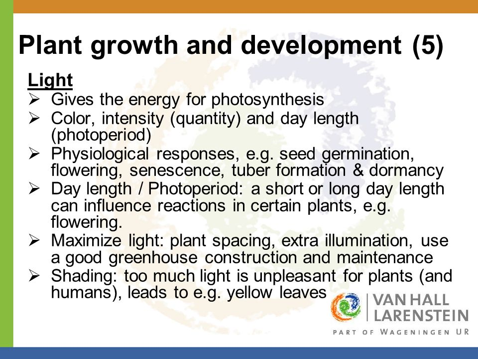 Plant growth and development (5) Light  Gives the energy for photosynthesis  Color, intensity (quantity) and day length (photoperiod)  Physiological responses, e.g.