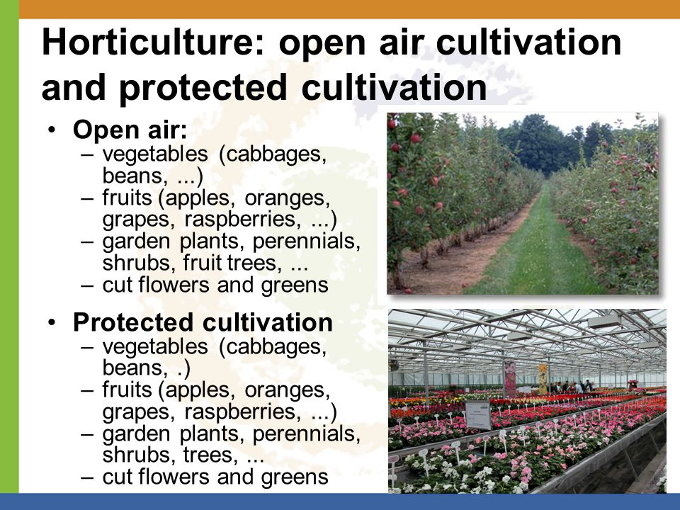 Horticulture: open air cultivation and protected cultivation Open air: –vegetables (cabbages, beans,...) –fruits (apples, oranges, grapes, raspberries,...) –garden plants, perennials, shrubs, fruit trees,...