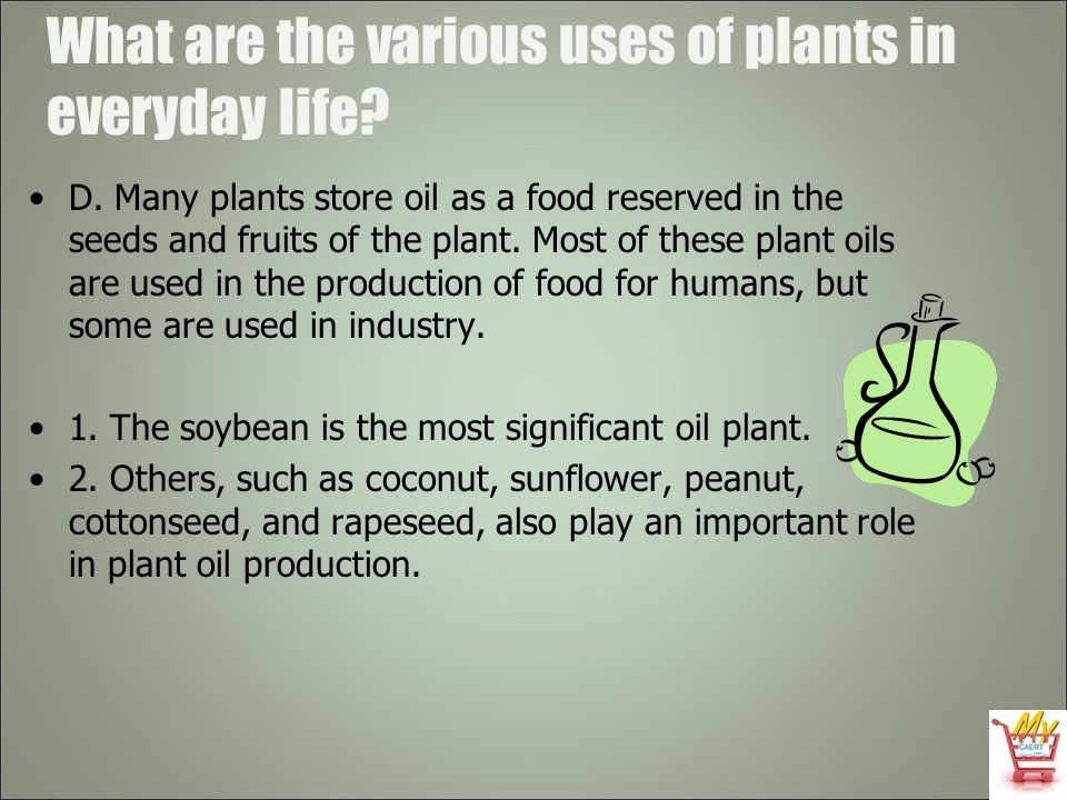 What are the various uses of plants in everyday life? D. Many plants store oil as a food reserved in the seeds and fruits of the plant. Most of these