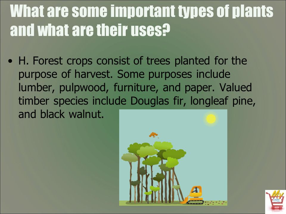 What are some important types of plants and what are their uses? H. Forest crops consist of trees planted for the purpose of harvest. Some purposes in