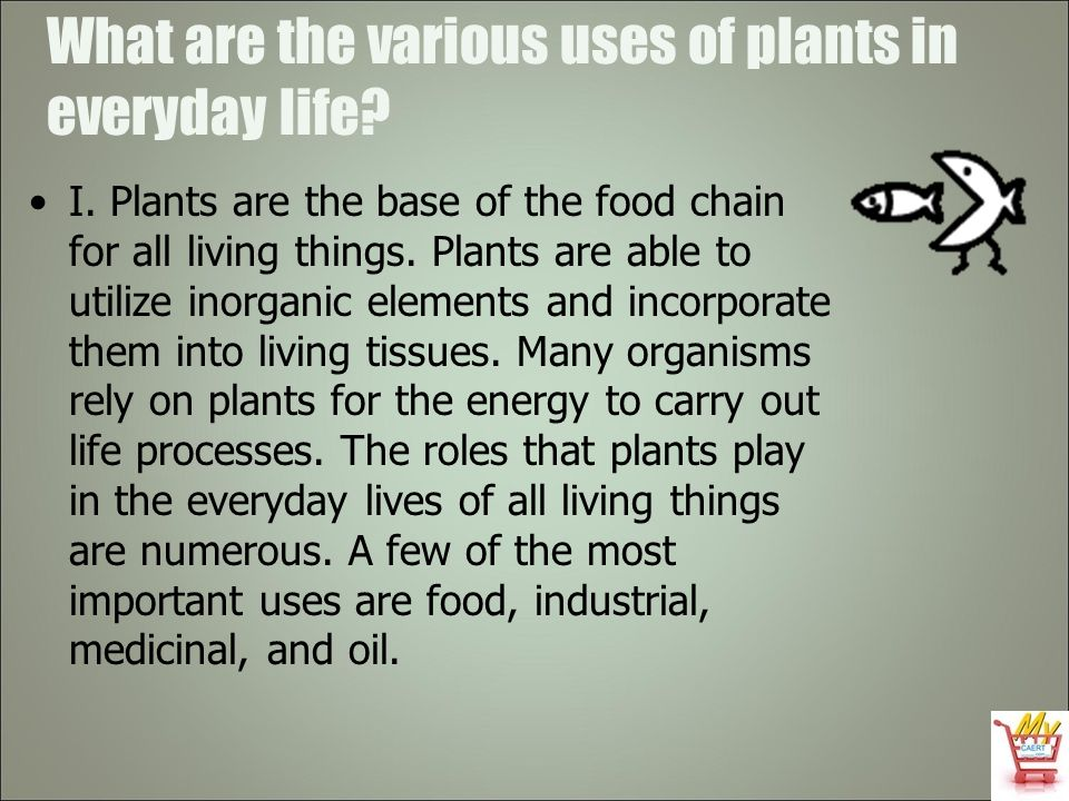 What are the various uses of plants in everyday life? I. Plants are the base of the food chain for all living things. Plants are able to utilize inorg