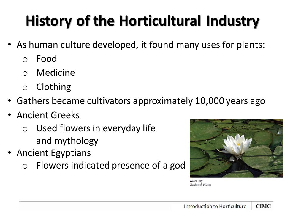 History of the Horticultural Industry As human culture developed, it found many uses for plants: o Food o Medicine o Clothing Gathers became cultivators approximately 10,000 years ago Ancient Greeks o Used flowers in everyday life and mythology Ancient Egyptians o Flowers indicated presence of a god