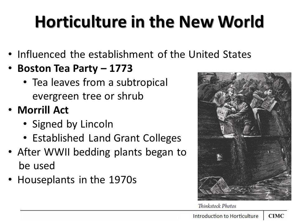 Horticulture in the New World Influenced the establishment of the United States Boston Tea Party – 1773 Tea leaves from a subtropical evergreen tree o