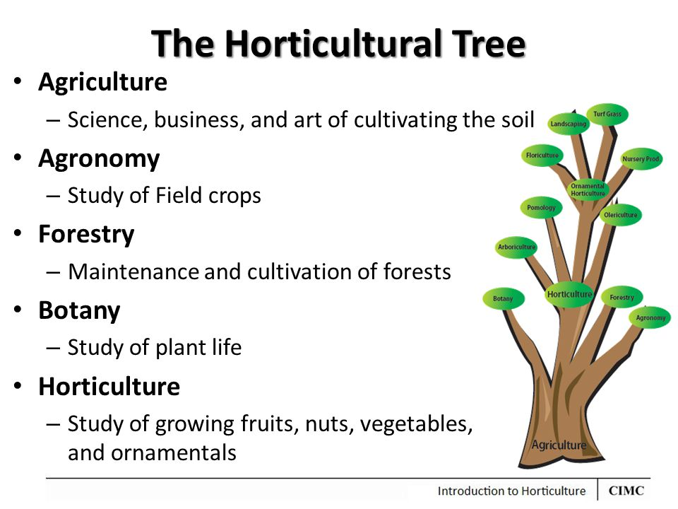 The Horticultural Tree Agriculture – Science, business, and art of cultivating the soil Agronomy – Study of Field crops Forestry – Maintenance and cul