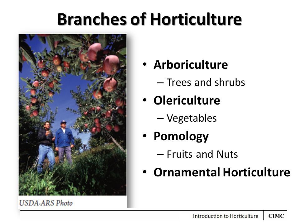 Branches of Horticulture Arboriculture – Trees and shrubs Olericulture – Vegetables Pomology – Fruits and Nuts Ornamental Horticulture