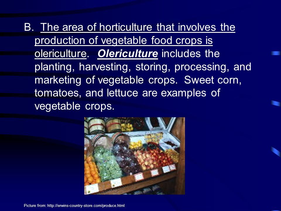 B.The area of horticulture that involves the production of vegetable food crops is olericulture.