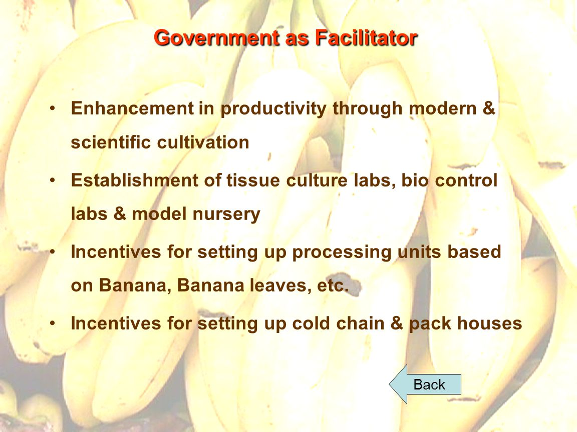 30 Government as Facilitator Enhancement in productivity through modern & scientific cultivation Establishment of tissue culture labs, bio control labs & model nursery Incentives for setting up processing units based on Banana, Banana leaves, etc.