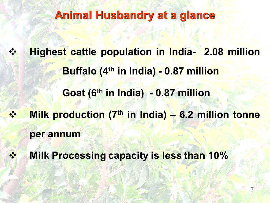 7 Animal Husbandry at a glance  Highest cattle population in India- 2.08 million Buffalo (4 th in India) - 0.87 million Goat (6 th in India) - 0.87 million  Milk production (7 th in India) – 6.2 million tonne per annum  Milk Processing capacity is less than 10%