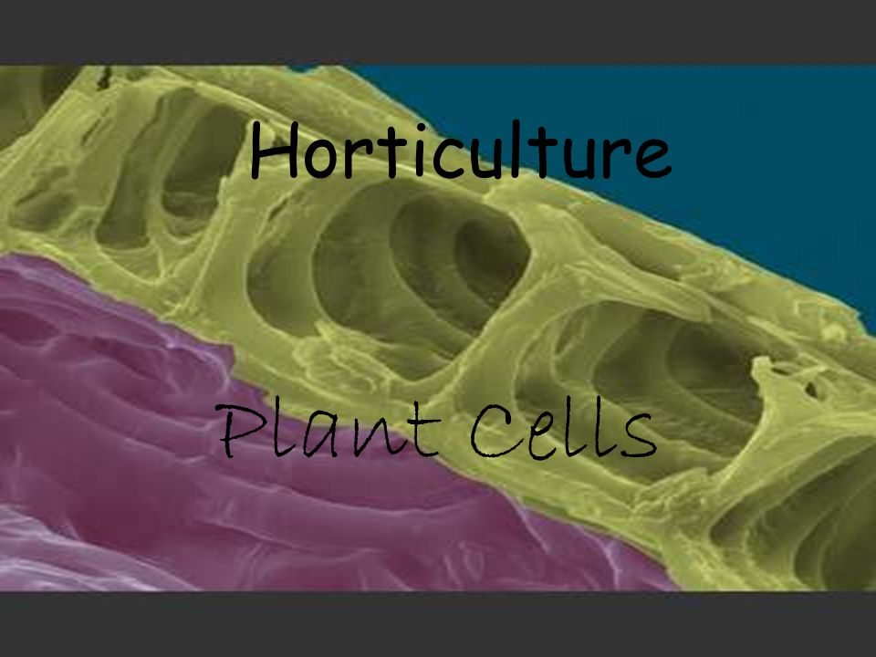 Horticulture Plant Cells