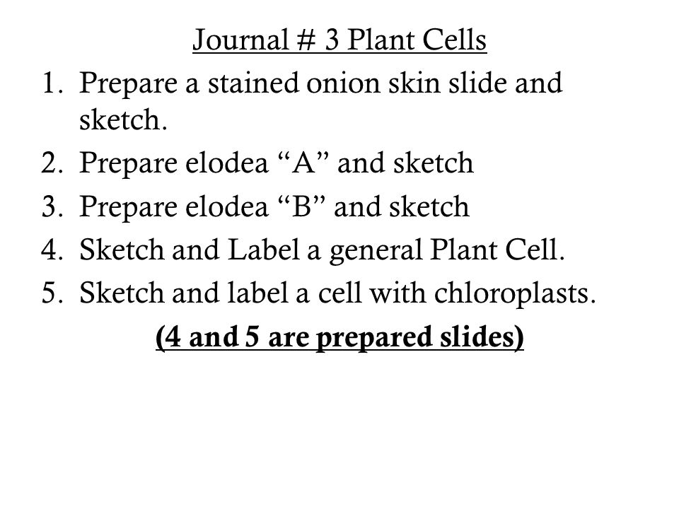 Journal # 3 Plant Cells 1.Prepare a stained onion skin slide and sketch.