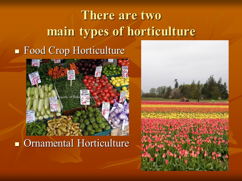 There are two main types of horticulture Food Crop Horticulture Food Crop Horticulture Ornamental Horticulture Ornamental Horticulture