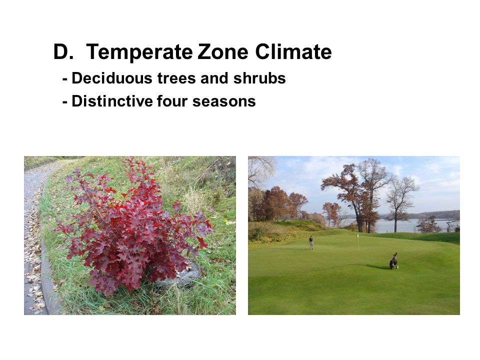 D. Temperate Zone Climate - Deciduous trees and shrubs - Distinctive four seasons