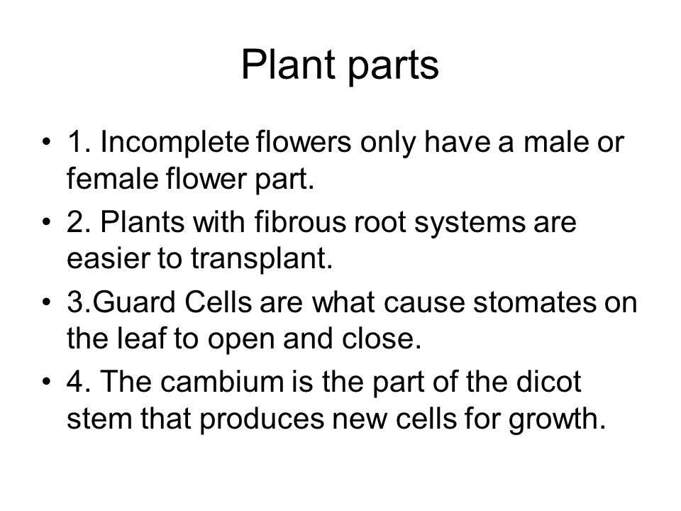 Plant parts 5.Plants are green because of the Chloroplasts in them.