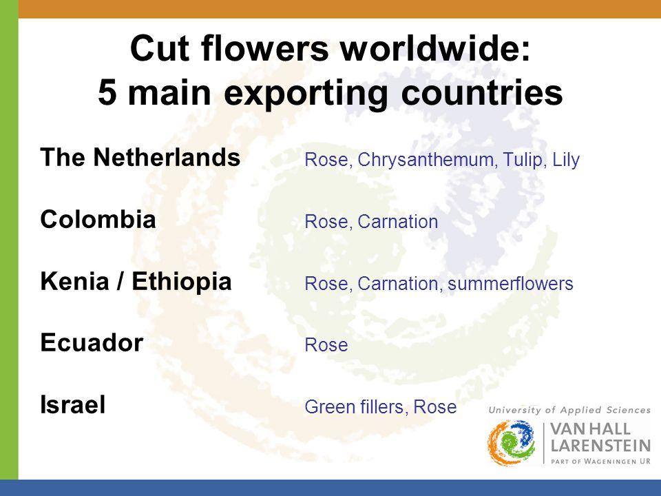 Cut flowers worldwide: 5 main exporting countries The Netherlands Rose, Chrysanthemum, Tulip, Lily Colombia Rose, Carnation Kenia / Ethiopia Rose, Carnation, summerflowers Ecuador Rose Israel Green fillers, Rose